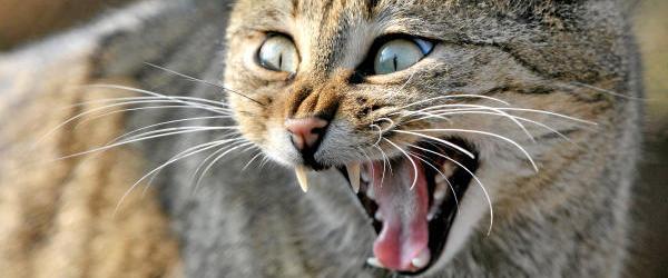 "Sem TH 04/20 ""Die kranke Katze"""
