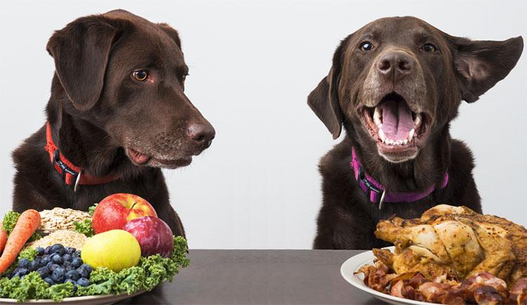 Sem Tier 02/18 Ernährung Hund und Katze